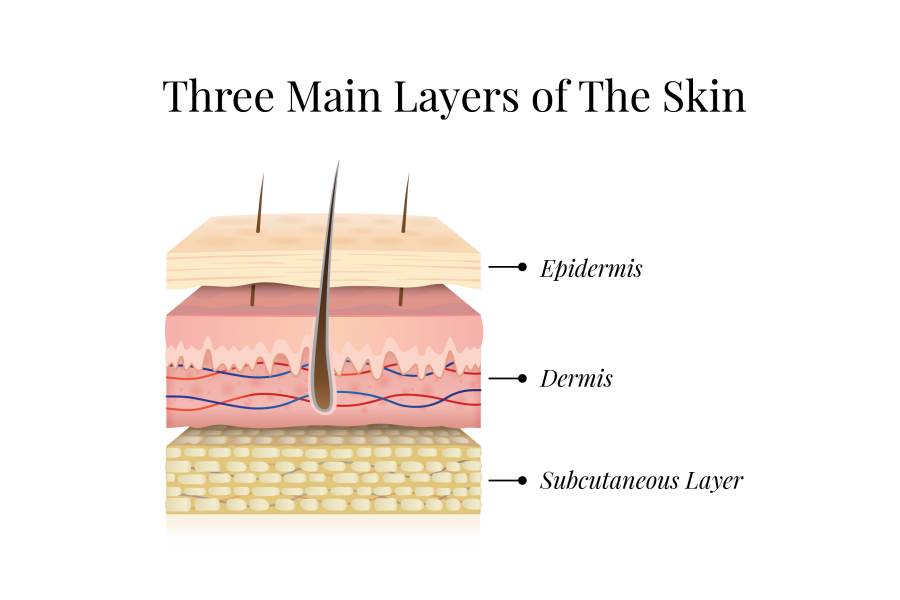 Illustration of three main layers of the skin